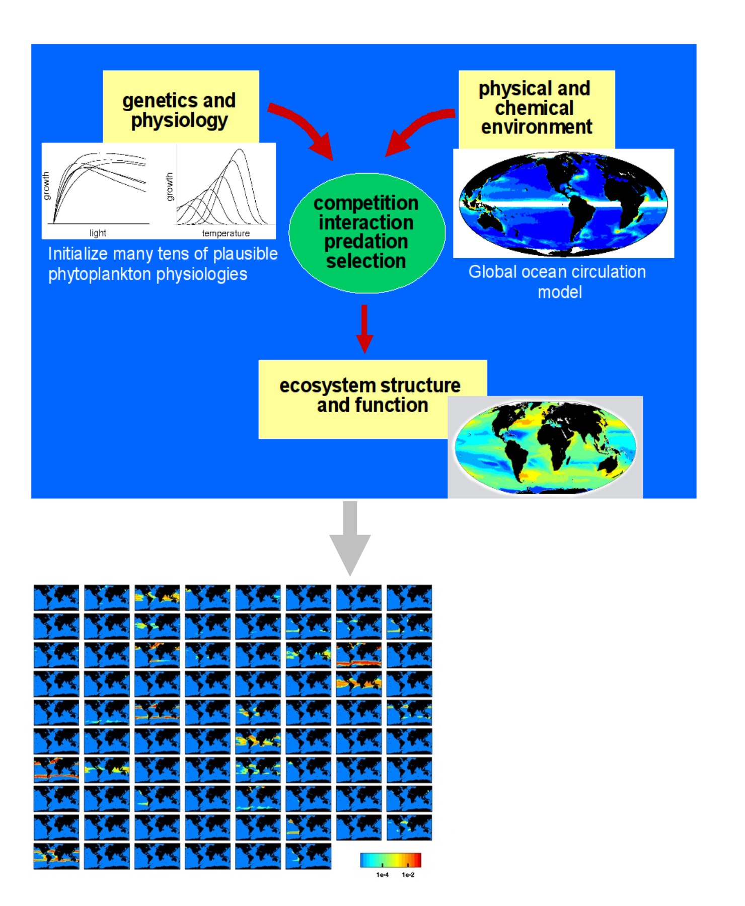 "Figure 1. Illustration of the key components in the self-assembling phytoplankton community model. After some years of interaction, the fittest ""types"" persist and occupy distinct habitats."
