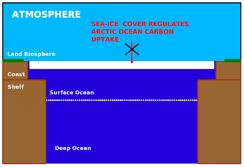 Figure 2a: Schematic of the Wintertimes Arctic Ocean Carbon Cycle