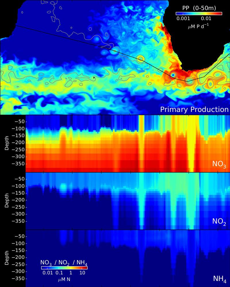 This figure shows nitrogen stocks modeled using MITgcm along Agulhas ring tracks. Warmer colors indicate higher concentrations of nitrogen compounds. Image courtesy: Oliver Jahn