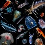 image_2832-Plankton