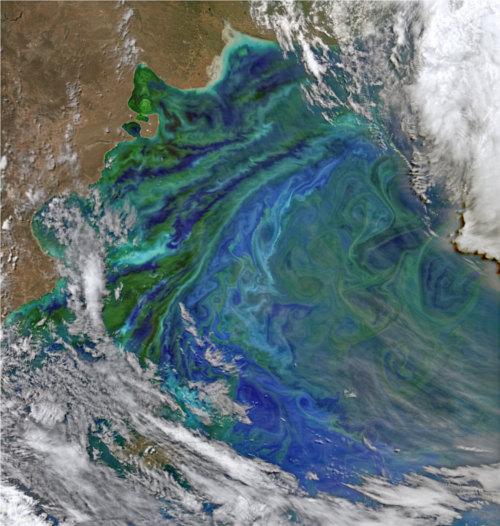 Phytoplankton Bloom over the Patagonia Shelf - NASA/ Earth Observatory